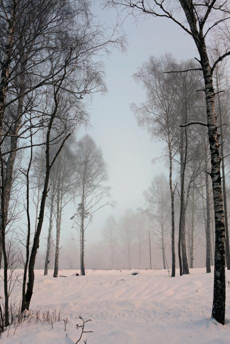 trees9244